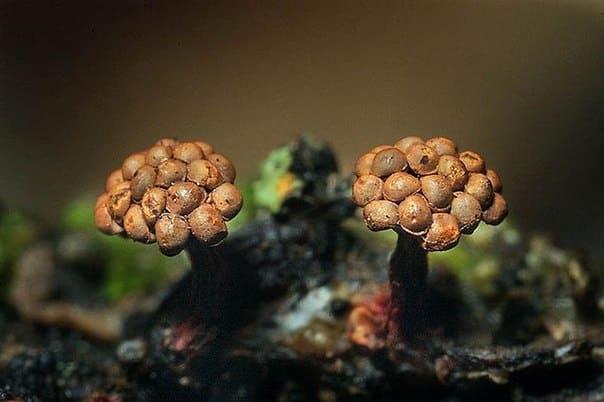 Микроскопы Sigeta